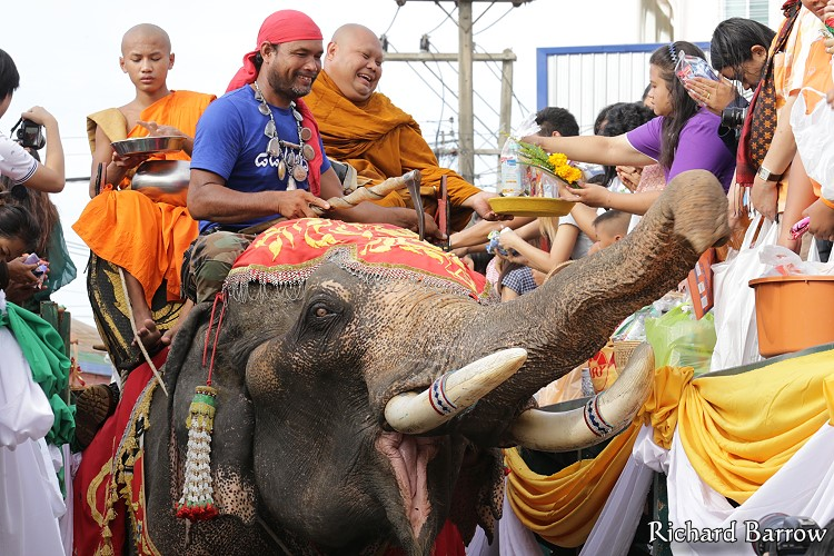 Surin Buddhist Lent Candle Procession and Elephant Ride Alms Giving